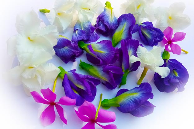 Beautiful Flowers Wallpaper 1000 Free Download Vector Image Png Psd Files